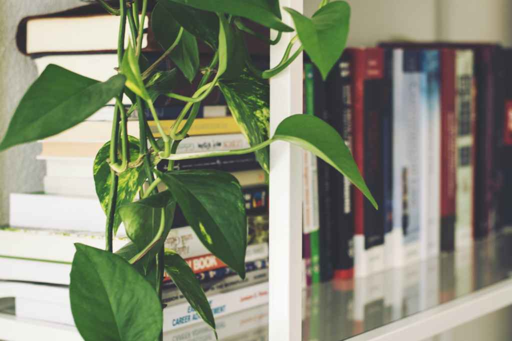 A white bookshelf full of books. The books are out of focus and the camera is focusing on a pothos plant vine in the foreground on top of a stack of books.