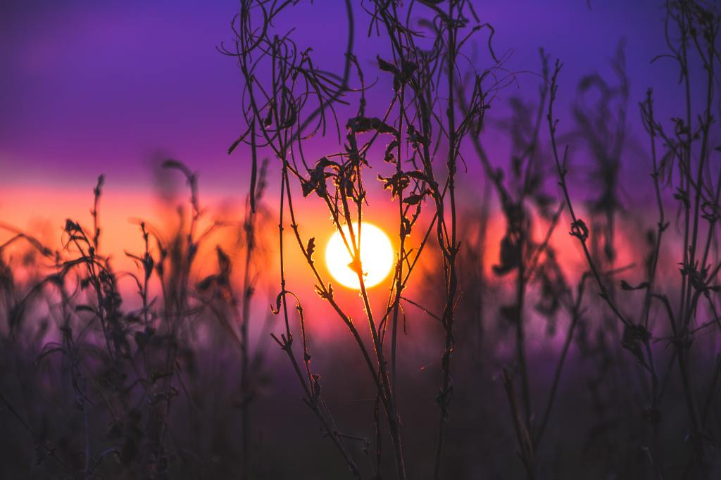 A sunset scene with a dark purple sky and an orange streak in the center of the photo containing the sun in the background. In the foreground, tall, thin plant stalks are in focus showing the sun behind them.